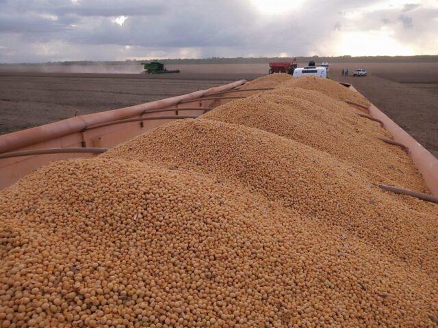 Soja, lavoura, colheita, grão